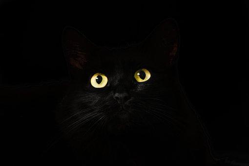 Cat S Eyes, Cat, Black, À La Recherche
