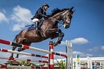 horse, rider, show jumping