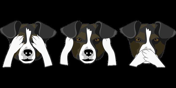 Dogs, Heads, Funny, Pet, Animal, Head