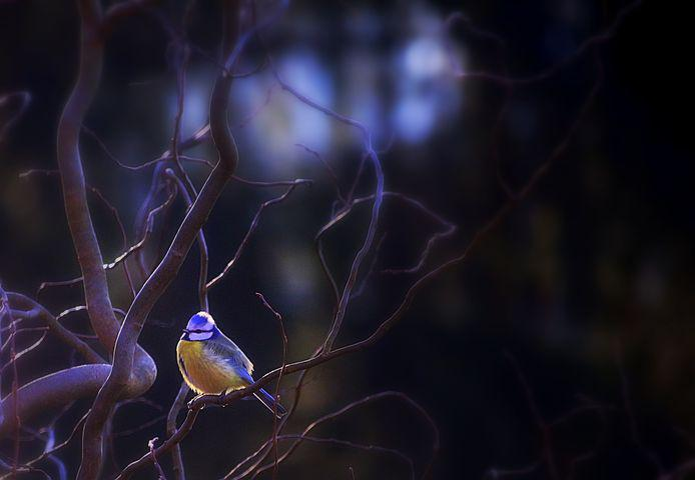 картинки птицы ночью они для