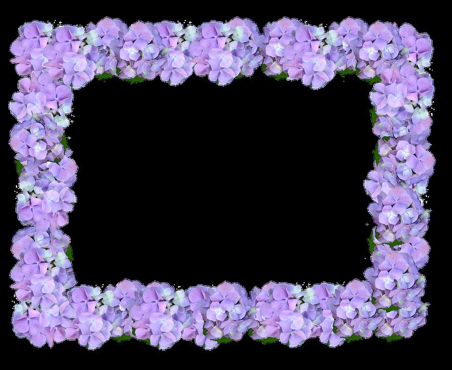marco hortensia  u00b7 foto gratis en pixabay hydrangea clip art border free hydrangea clip art free