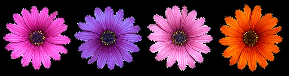 Flower Flowers Daisy - Free photo on Pixabay