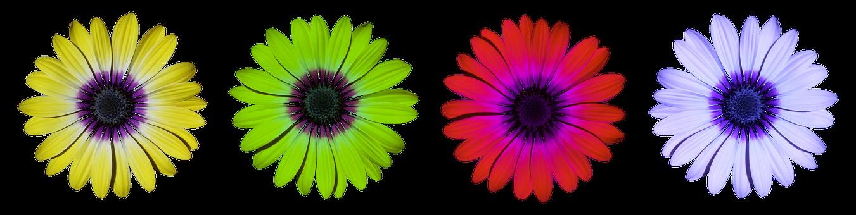 Flower, Flowers, Daisy, Summer