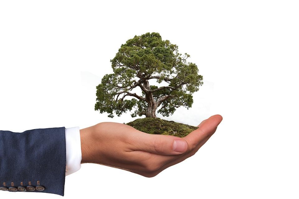 Утверждены требования к материалам оценки воздействия на окружающую среду