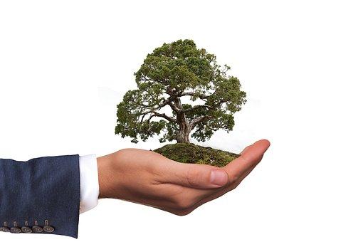 Environment, Tree, Nature