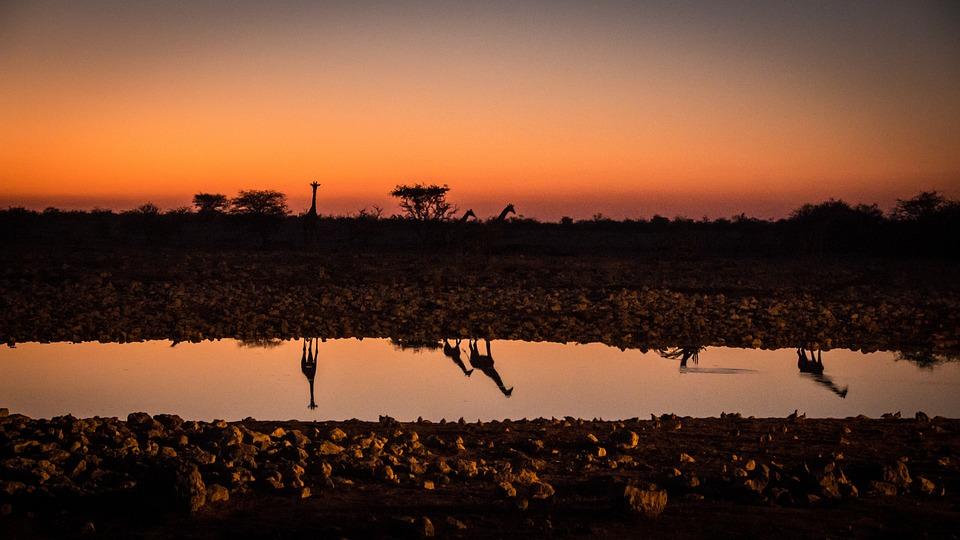 Namibia, Tierwelt, Afrika, Etosha, Landschaft, Safari
