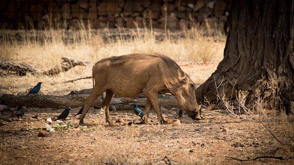 Namibia, Wildlife, Africa, Landscape