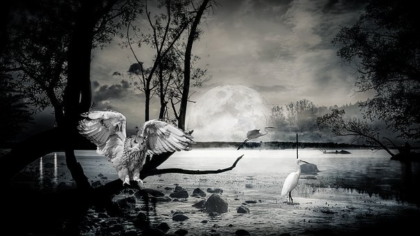 Composing, Lake, Ibis, Owl, Atmospheric