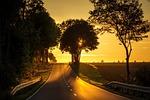 road, sunset, back light