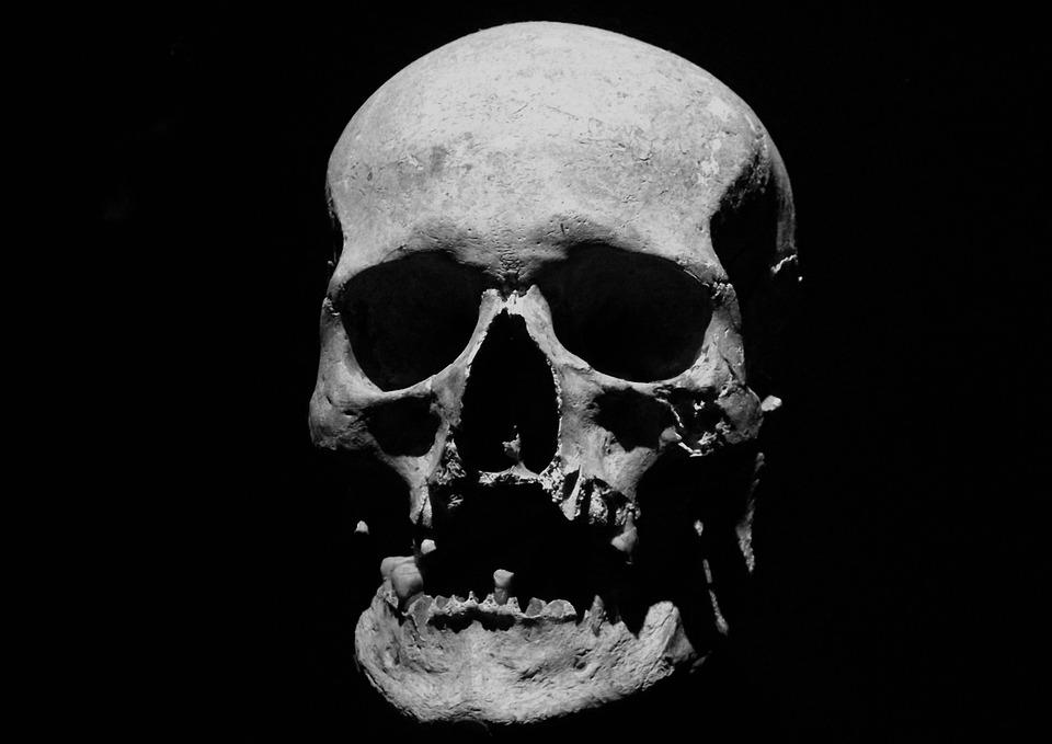 Free photo: Skull, Corpse, Halloween, Skeleton - Free Image on ...