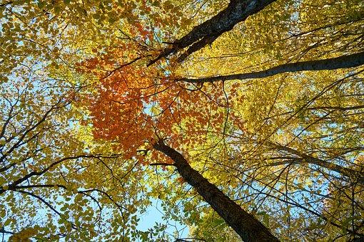 Autumn, Season, Landscape, Nature
