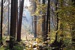 forest, tree, autumn