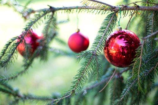 Christmas Bulbs, Red, Pine Tree