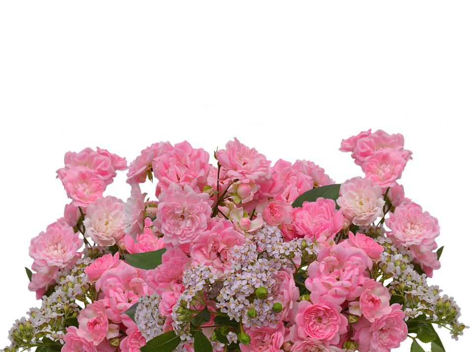 Free photo: Roses, Love, Pink Roses - Free Image on Pixabay - 2958735