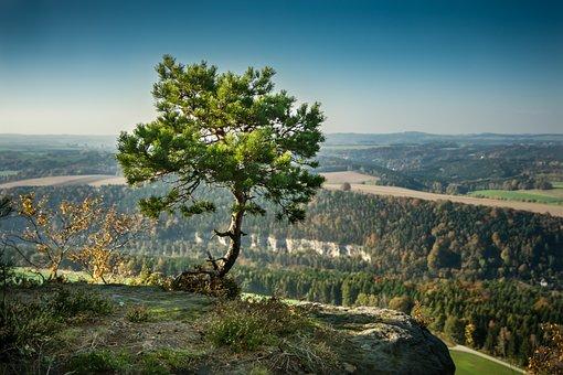 Pine, Tree, Alone, Rock