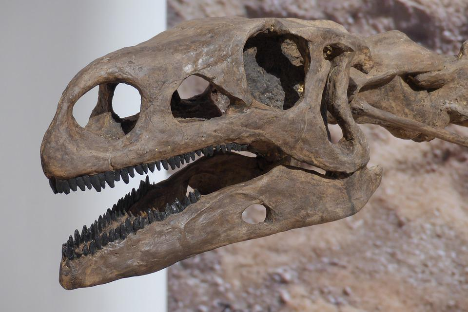 Dinosaurier Saurier Knochen · Kostenloses Foto auf Pixabay