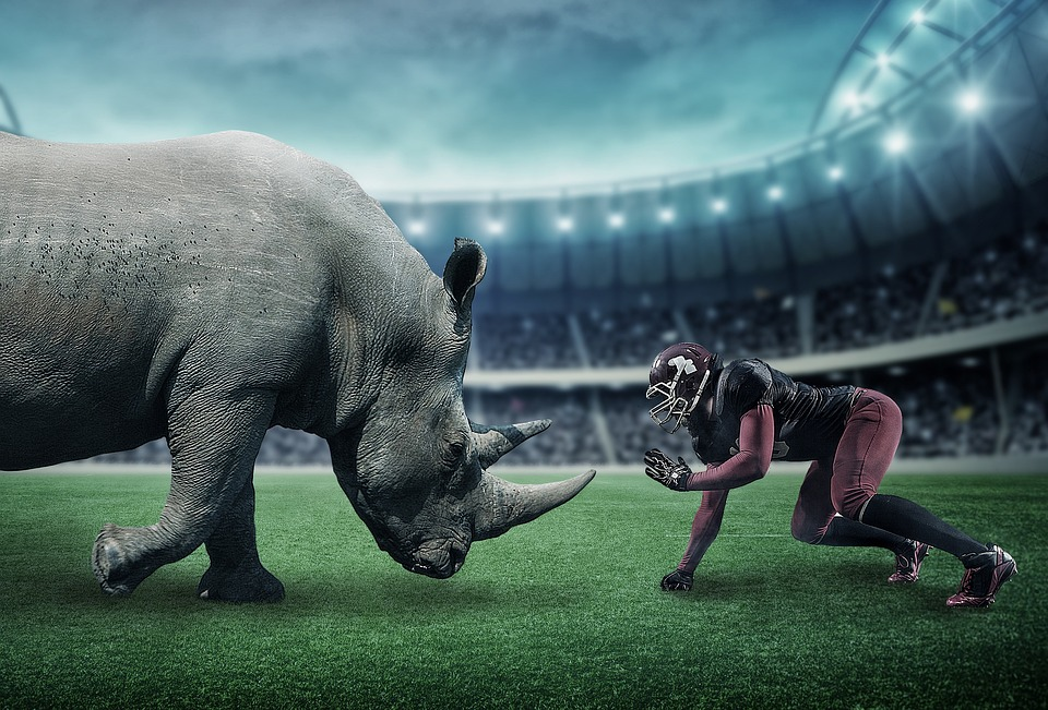 American Football, Rhino, Sports, Wild Animals, Stadium