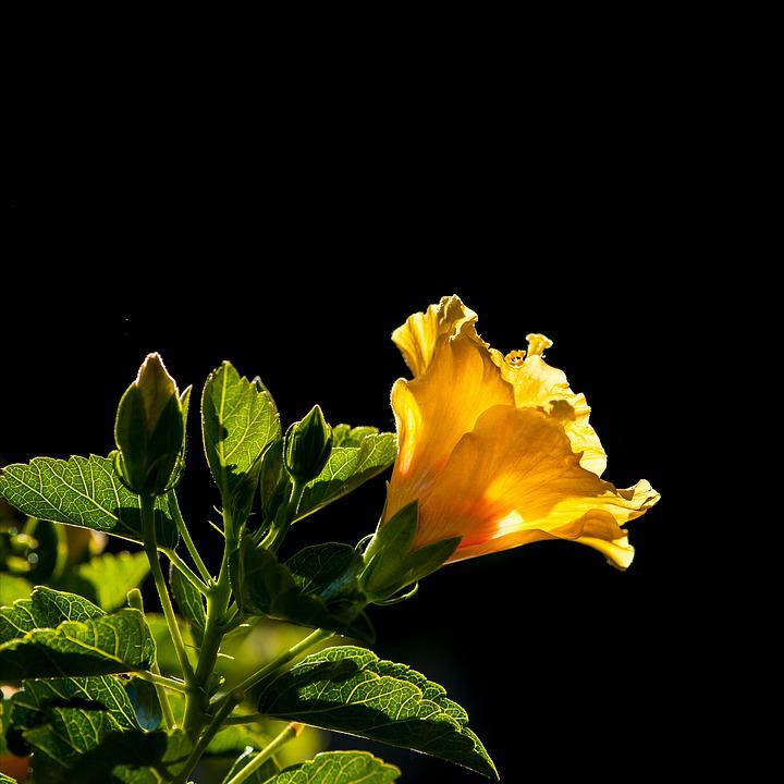 Fiori Gialli Bellissimi.Bellissimi Fiori Natura Foto Gratis Su Pixabay