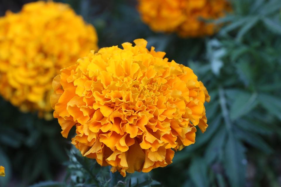 Flower yellow nature free photo on pixabay flower yellow nature yellow flowers plant color mightylinksfo