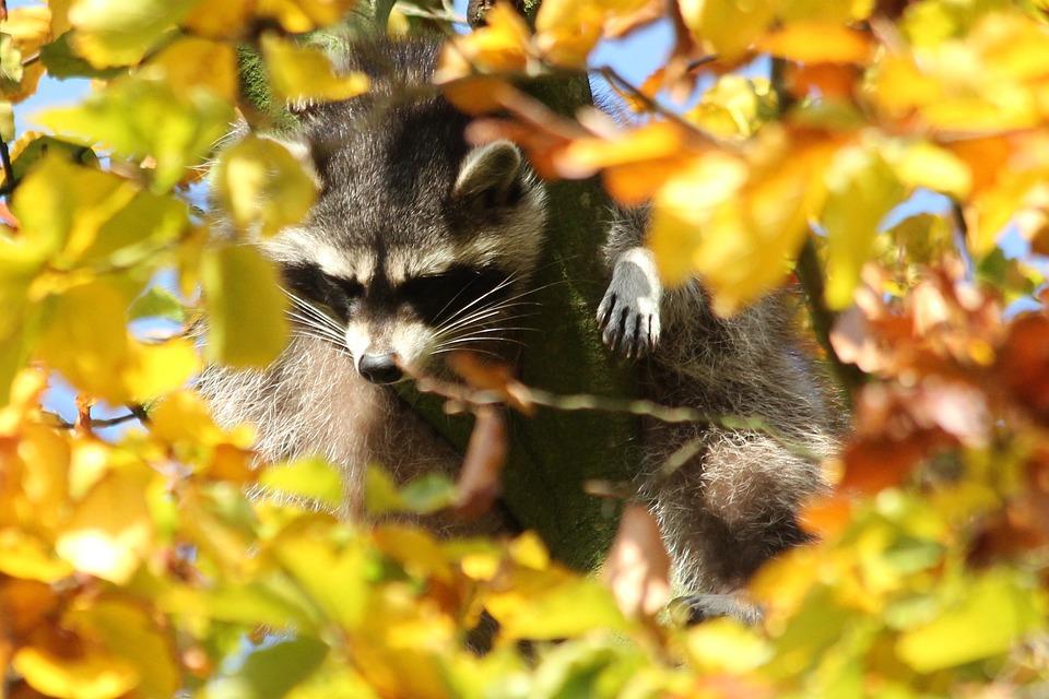 Iets Nieuws Dierentuin Dieren Herfst · Gratis foto op Pixabay #EL03