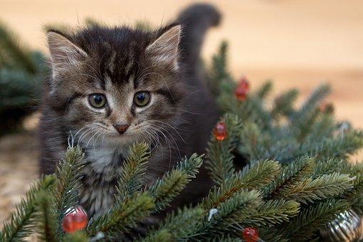 Kitten, New Year'S Eve