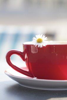 Cup, Tee, Margarite, Flower, Coffee