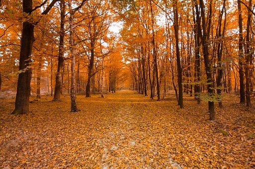 Forest, Autumn, Orange, Colorful, Nature