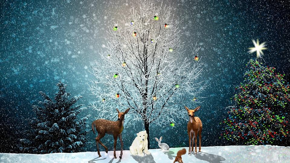 Christmas, Christmas Tree, Greeting Card, Animals, Deer