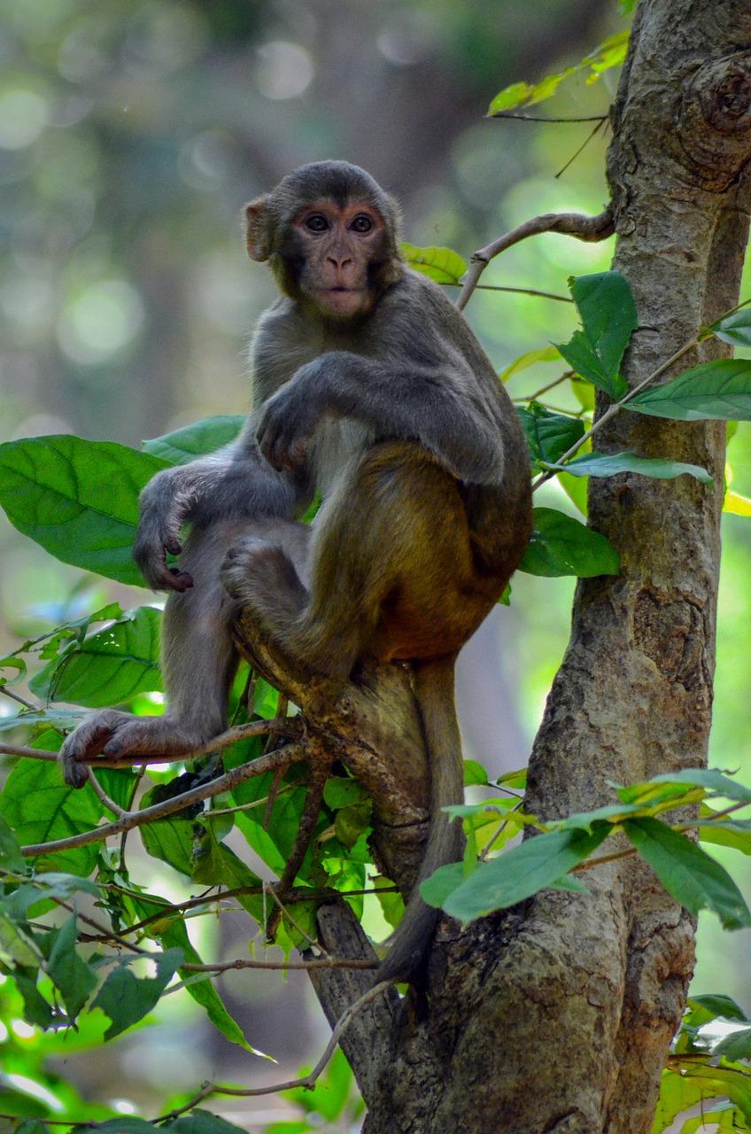 штукатурка обезьянки в джунглях картинка выглядеть привлекательно заложено