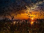 sunset, migratory birds