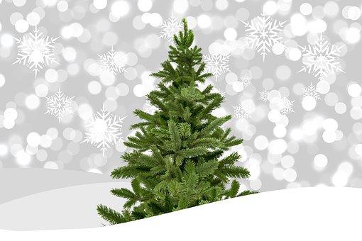 Weihnachten, Weihnachtsbaum, Tannenbaum