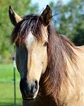 horse, ride, reiter