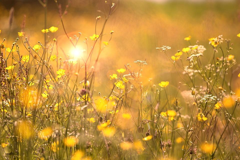 Blommor Sommar Natur - Gratis foto på Pixabay