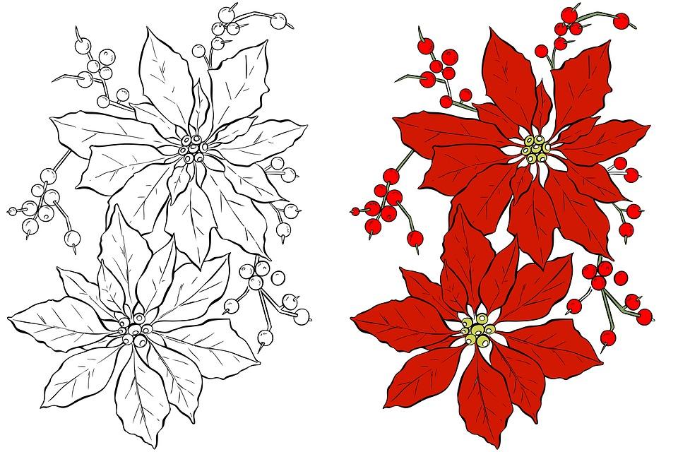 Weihnachtsstern Weihnachten Blume · Kostenloses Bild auf Pixabay