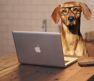 Hund, Laptop, Computer, Gläser, Brillen
