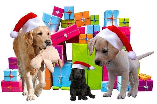 Kerstmis, Geschenken, Honden, Kerst Hond