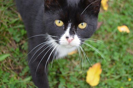 Cat, Feral, Feline, Animal, Pet, Fur