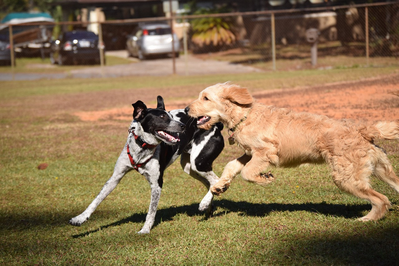 Картинки играющей собаки