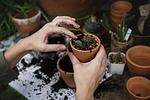 ecology, environment, garden