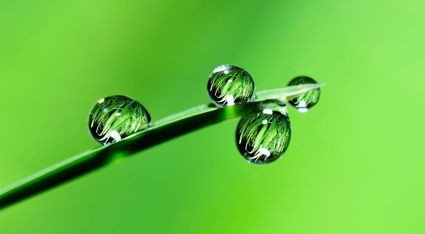 Water, Drops, Grass, Rain, Nature, Wet