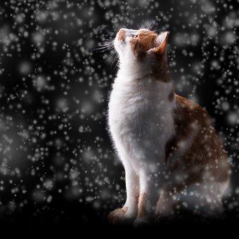 Schnee, Katze, Winter, Nacht, Kalt