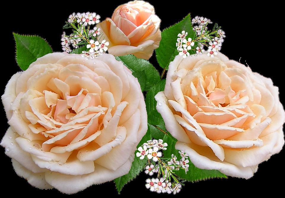 Вырезанные картинки цветов