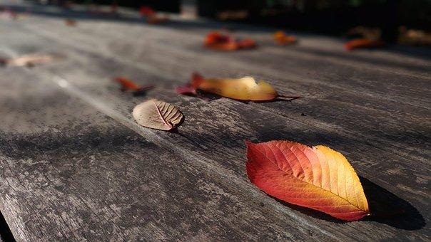 Fallen Leaves, Dead Leaf