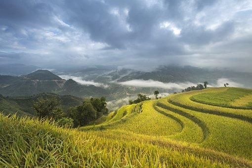 Vietnam, Terraces, Rice, Silk,Rice Floor