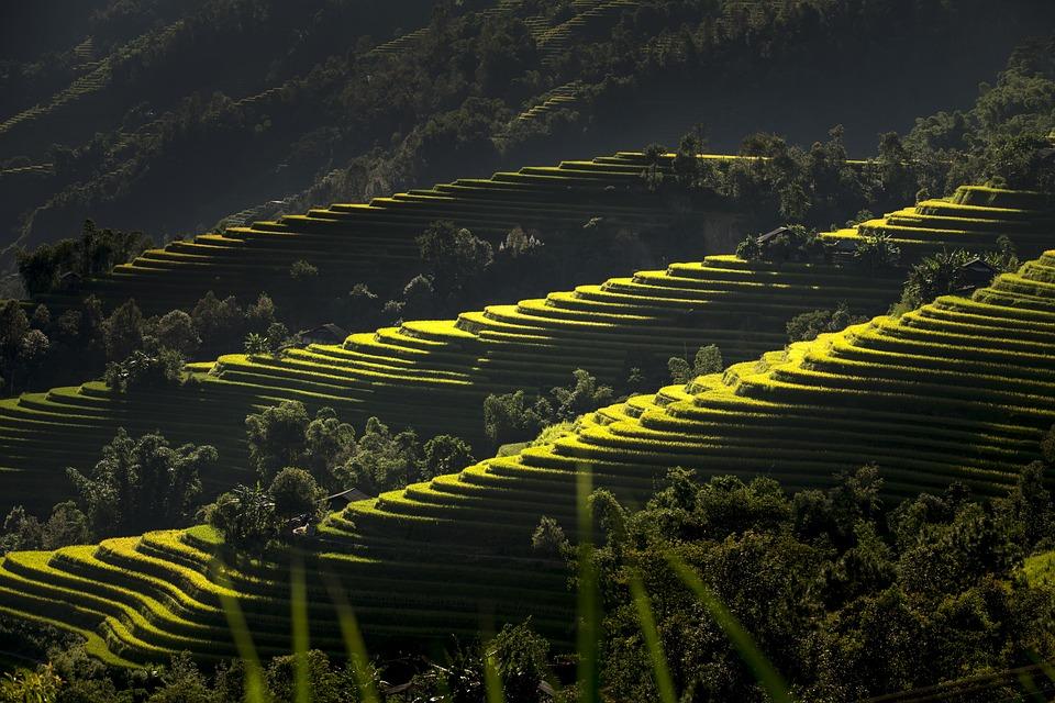 Vietnam Terrazas Arroz Foto Gratis En Pixabay
