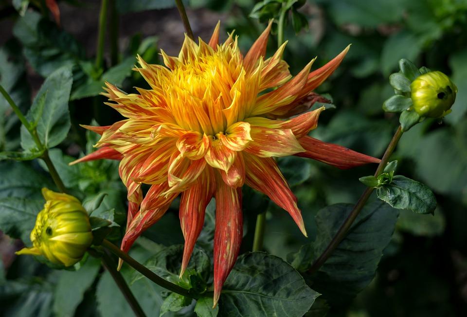 Free photo flower nature plant free image on pixabay 2988045 flower nature plant beautiful flower pink flower voltagebd Gallery