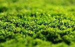 moss, green, dashing
