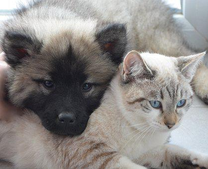 čierna matka dcéra mačičkachlpaté mačička veľký kozy