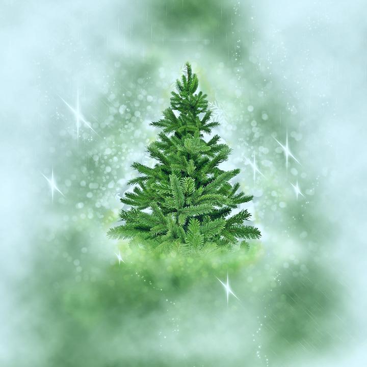 Weihnachtsbaum Schnee Weihnachten · Kostenloses Foto auf Pixabay