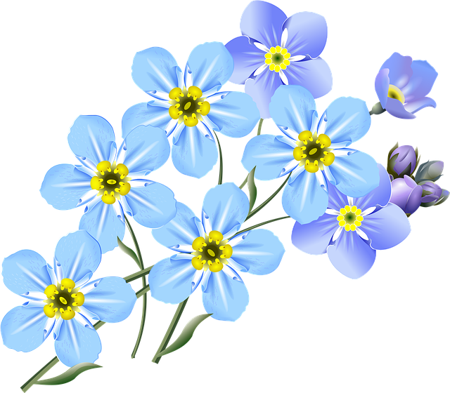 Free Illustration Drawing Forget Me Nots Blue Free Image On Pixabay 2993282